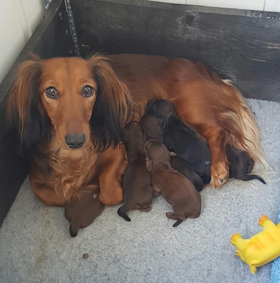 Stella med sin nyfødte gjeng.