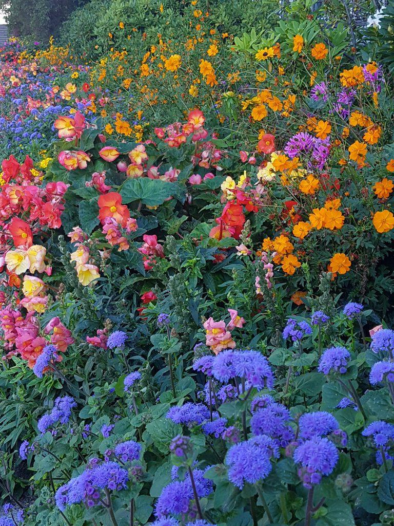 Fantastiske blomsterbed utenfor Oslo rådhus