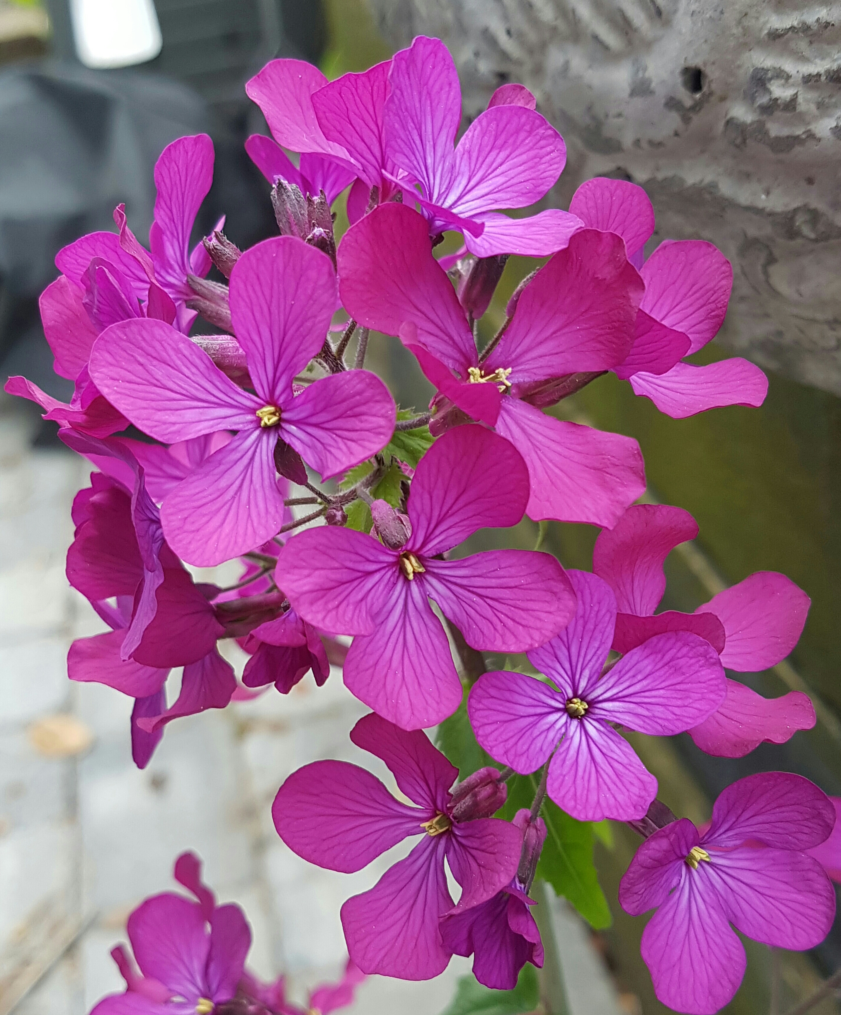 En plante med ett ansikt for hver sesong som kan såes nå!