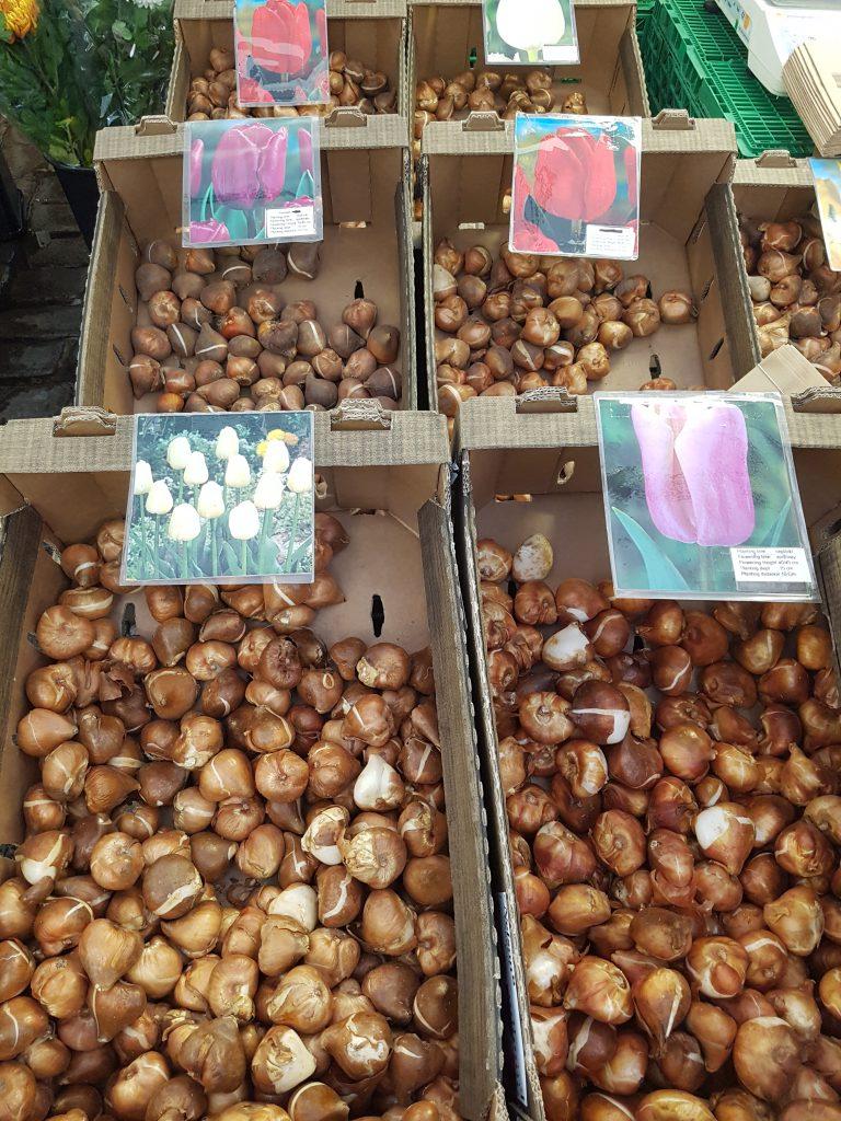 Tulipanløk i løsvekt