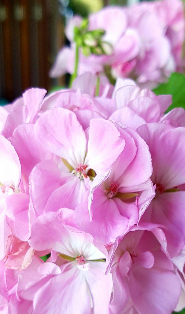 Sommerens herlige blomstring og farger som kommer igjen neste år.