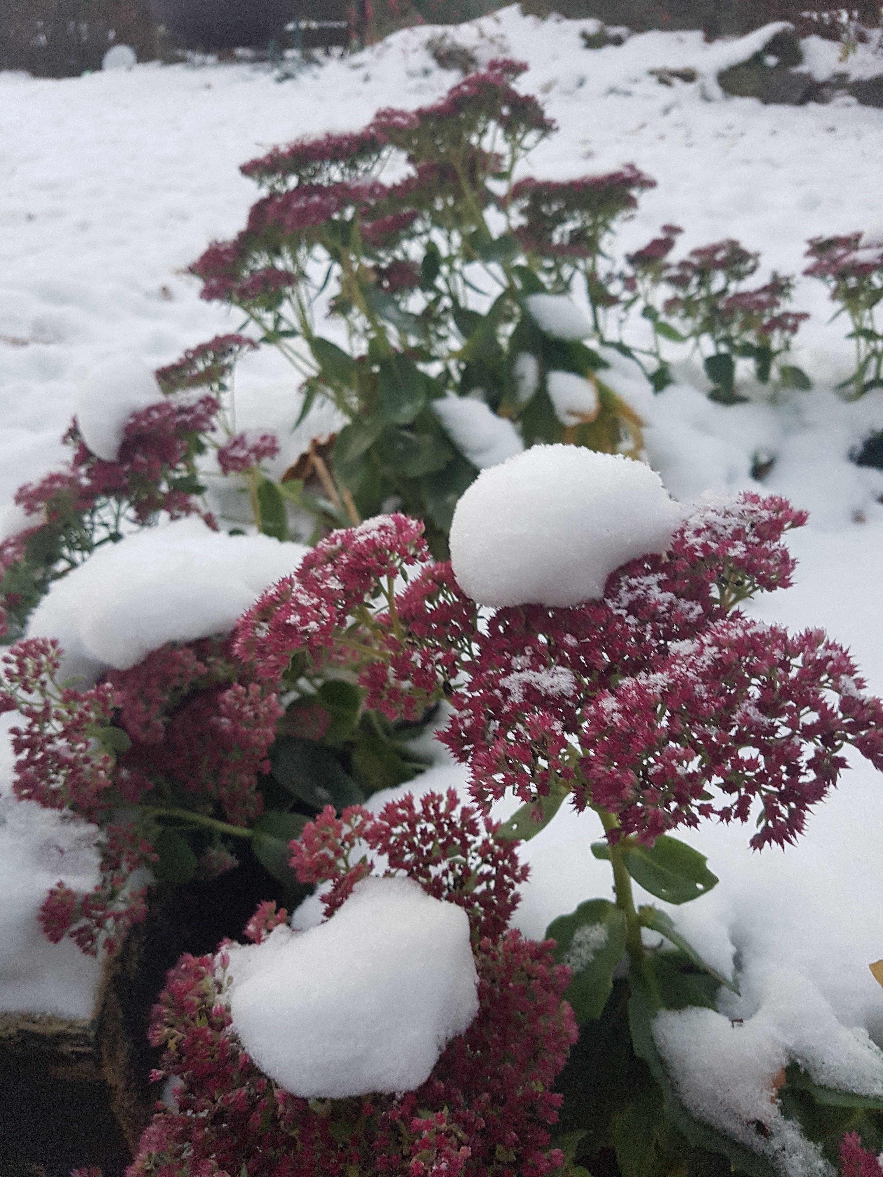 Et par ting som beskytter staudene våre gjennom vinteren
