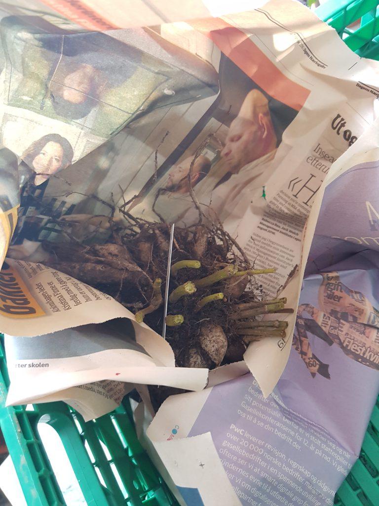 Et enkelt avispapir vikles lett rundt knollen