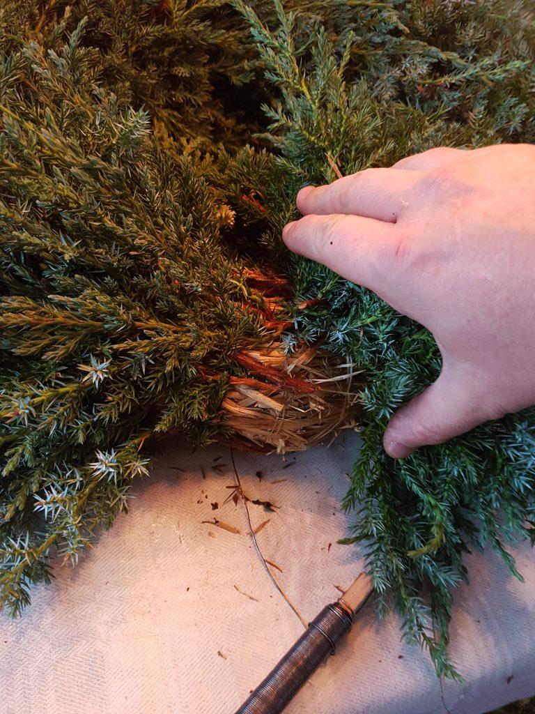 Når jeg kommer helt rundt løfter jeg opp starten slik at de siste grenene blir stukket innunder før de festes med vikletråden
