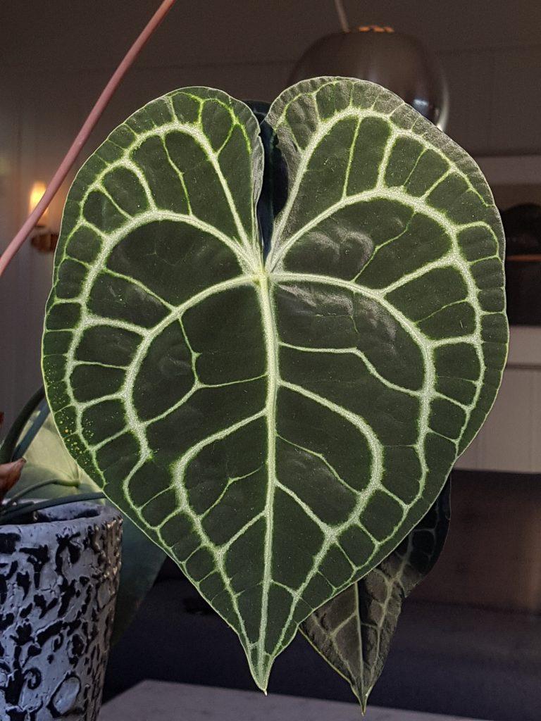 Gr nne planter arkiver skarpihagen for Planter til koidam