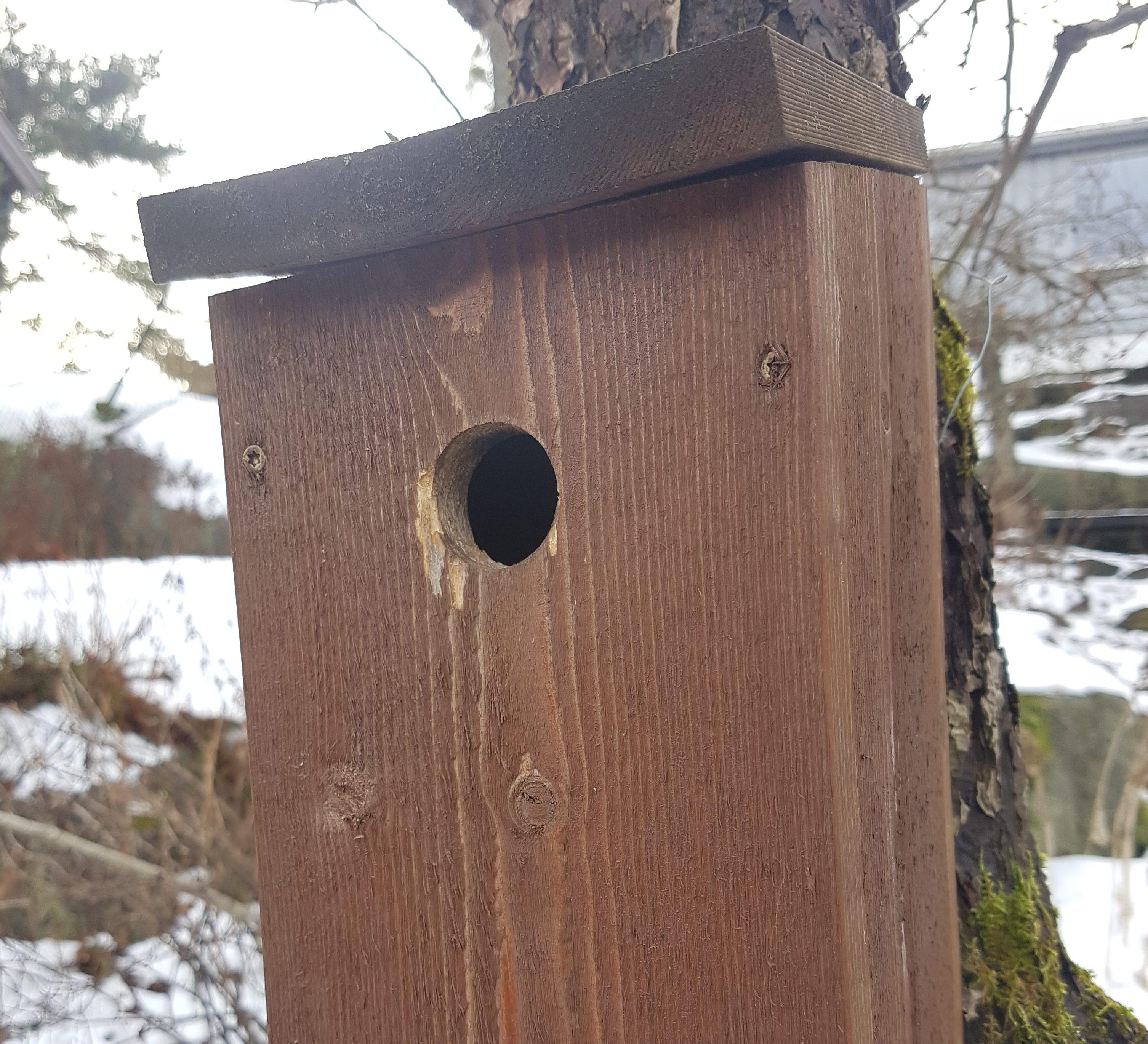 Innflytningsklar fuglekasse til alle fugler små de er