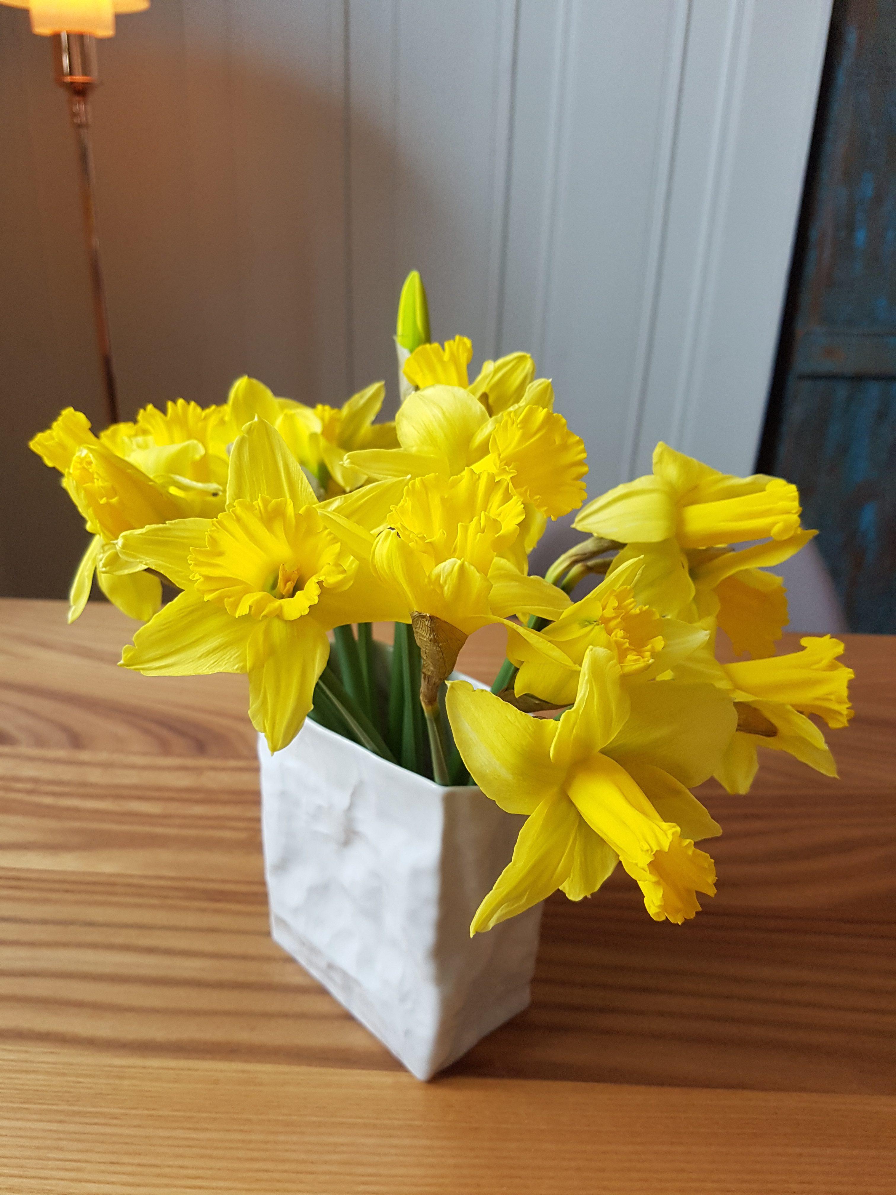 Påskelilje i vase er billig, enkelt og relativt holdbar vårglede innendørs.
