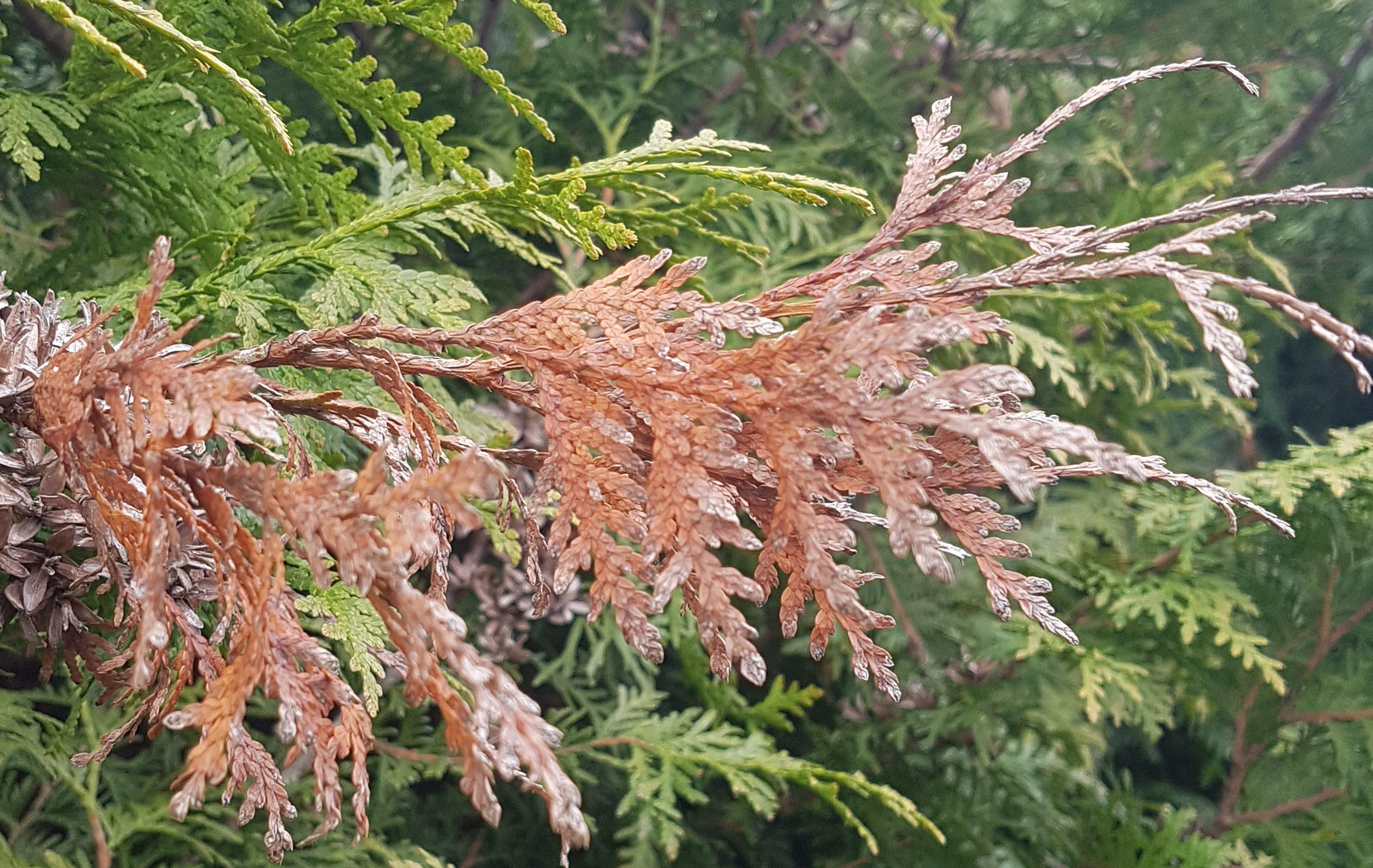 Beskytt plantene mot den skumle vårsola og uttørking