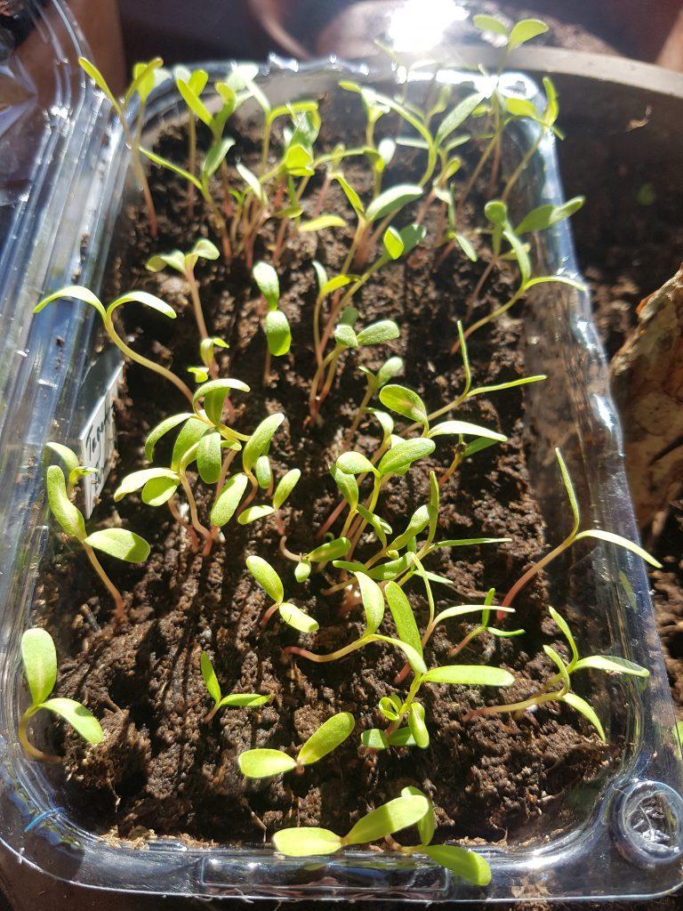 Nye planter