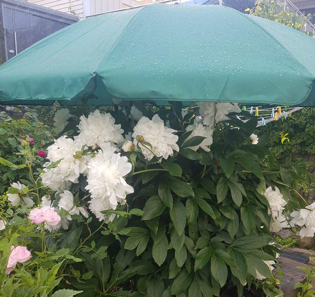 Beskyttelse mot regn