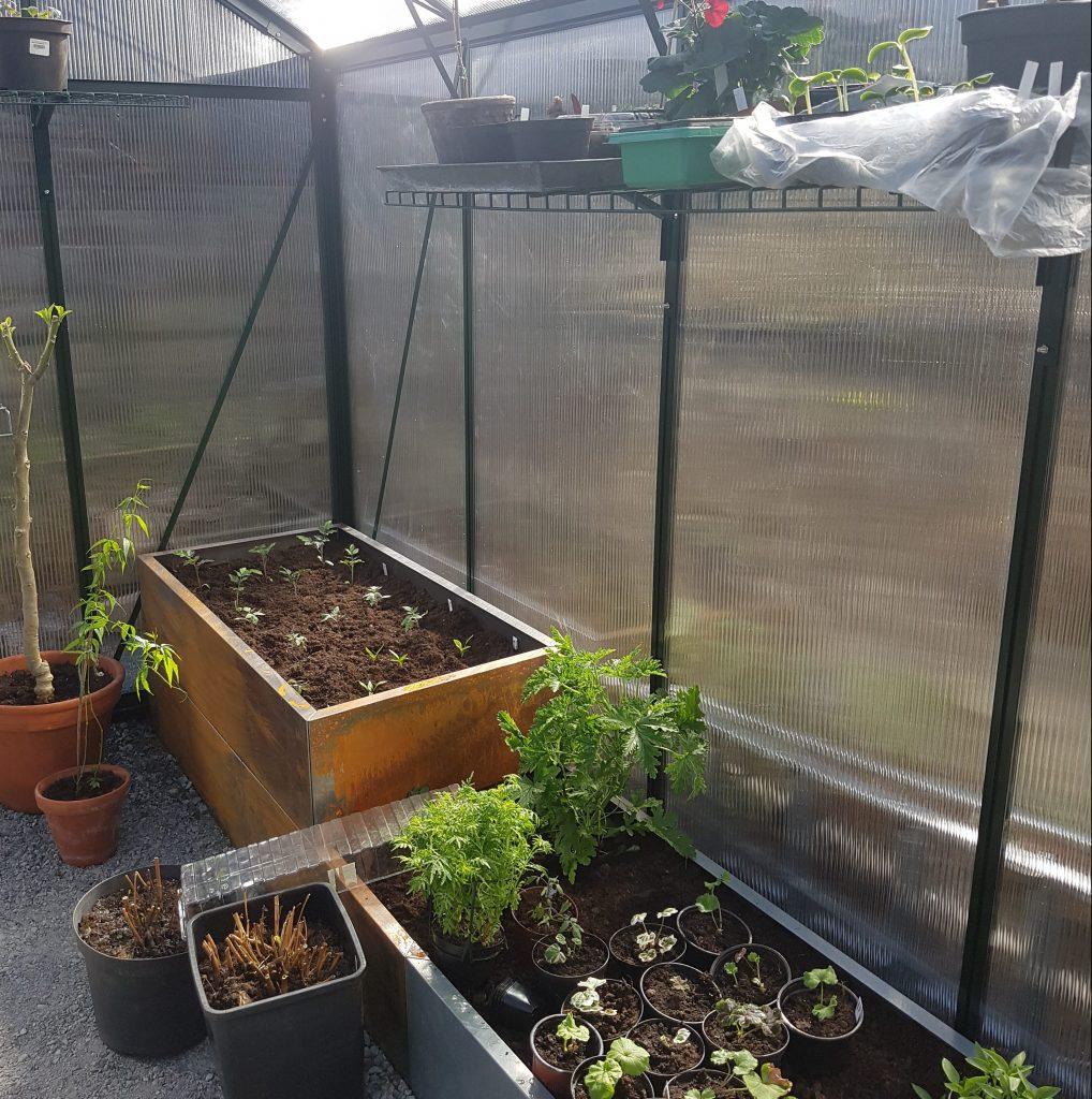 Planter i drivhuset