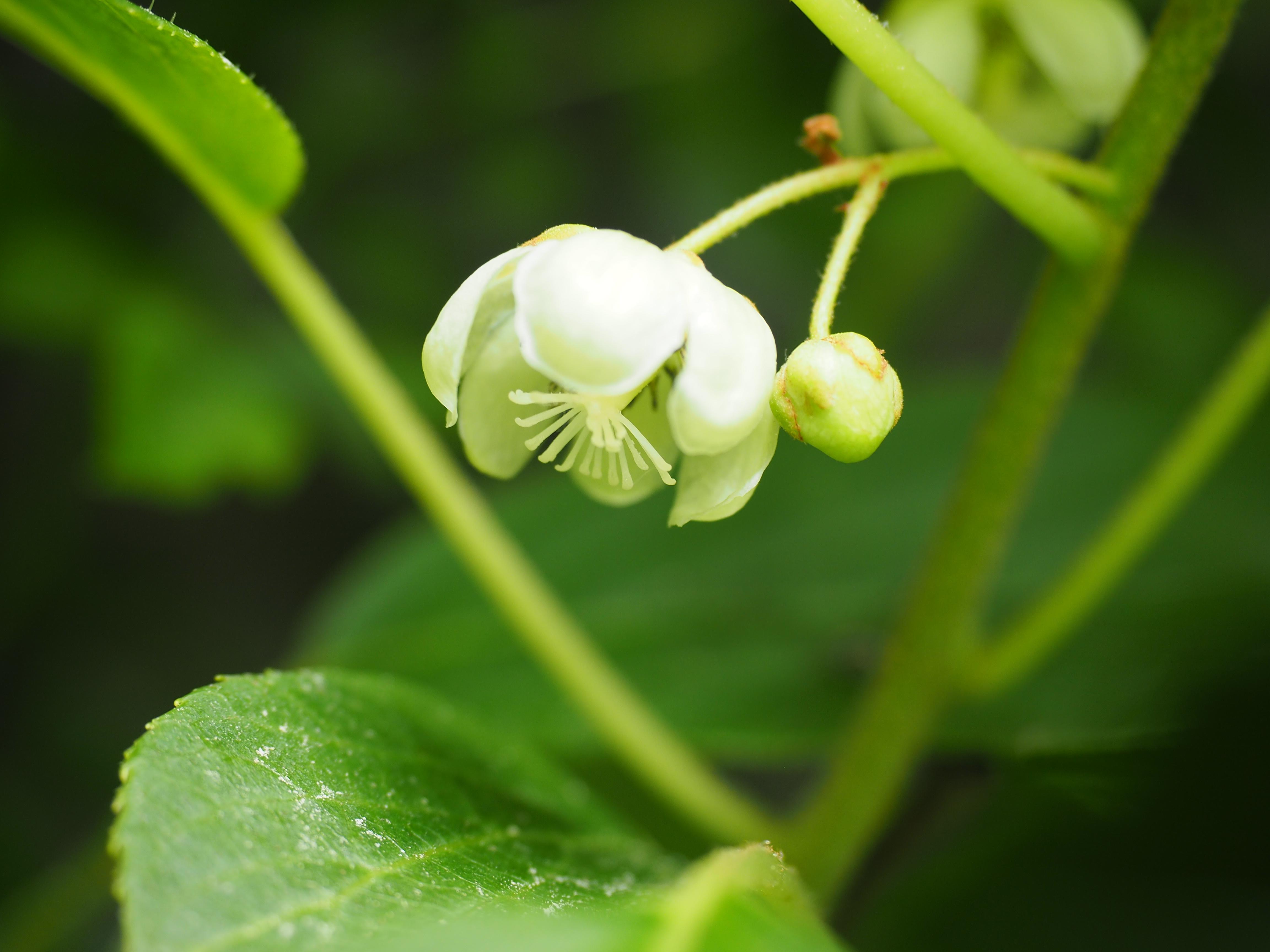 blomster frø norge