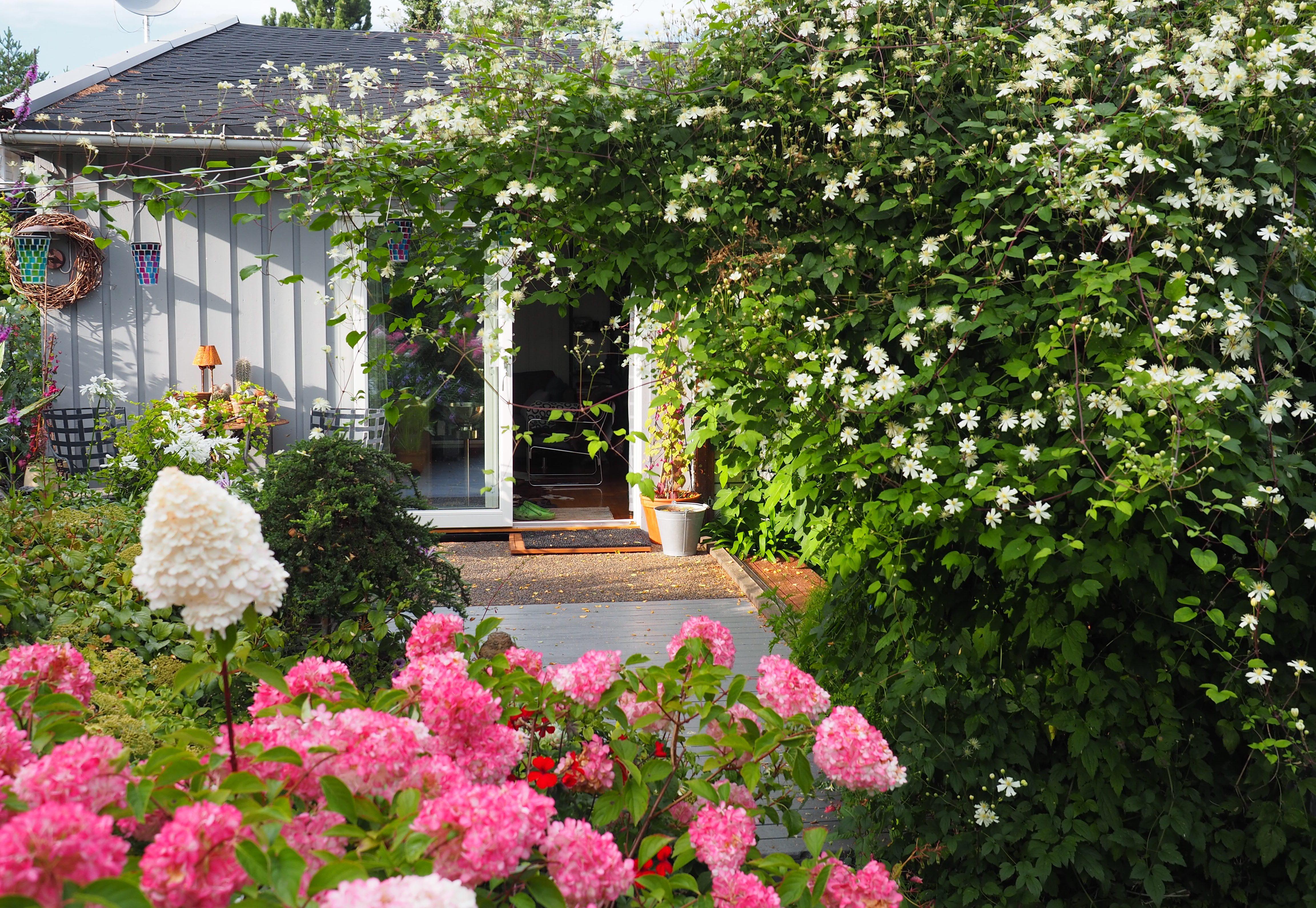40 høstblomstrende planter som gir farge i hagen nå!