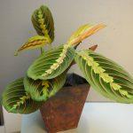 tropisk plante