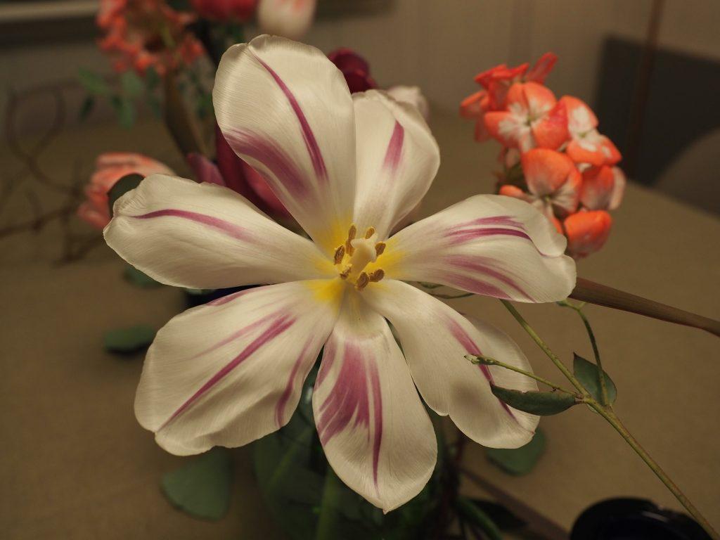 gjenbruk av tulipan