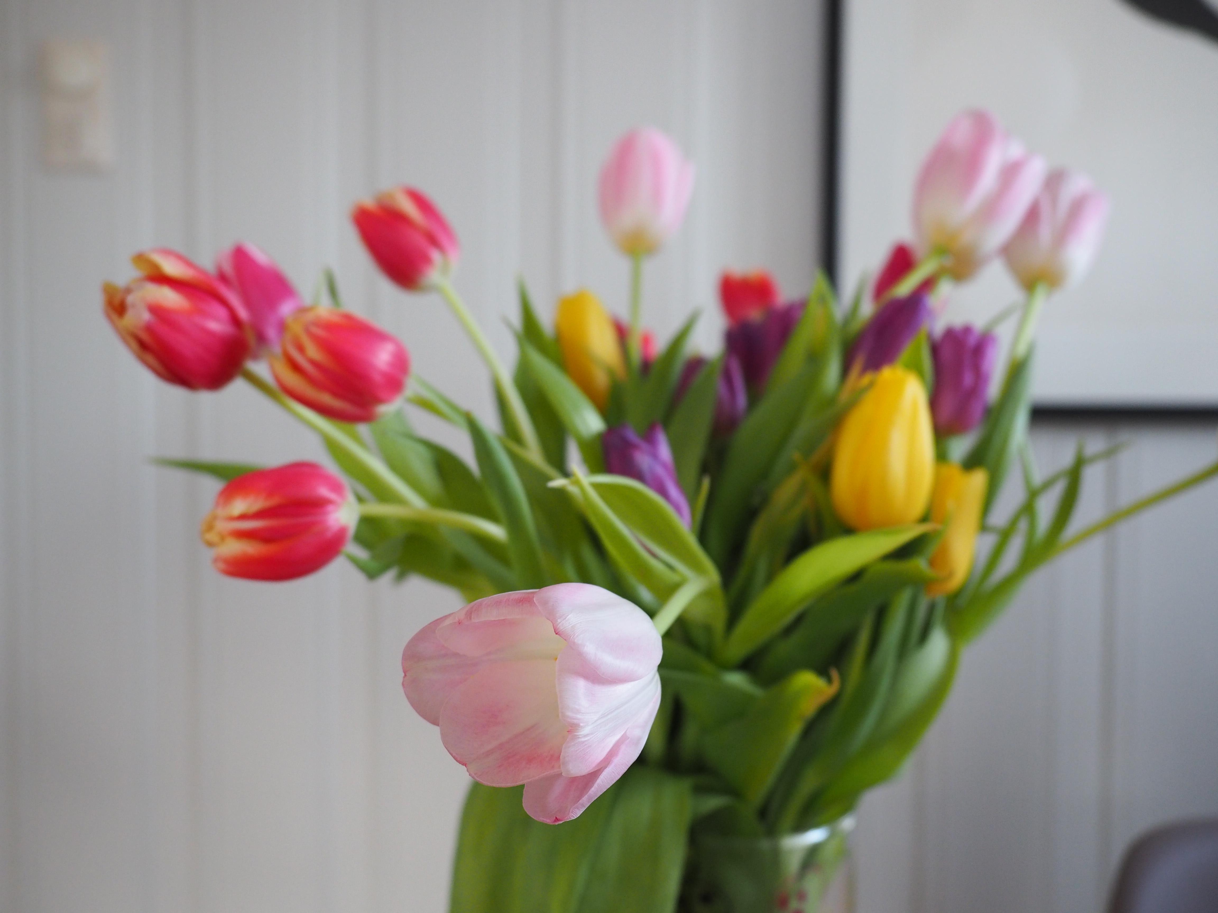 Tulipan i vase oppfører seg forskjellig avhengig av hvilken type det er.