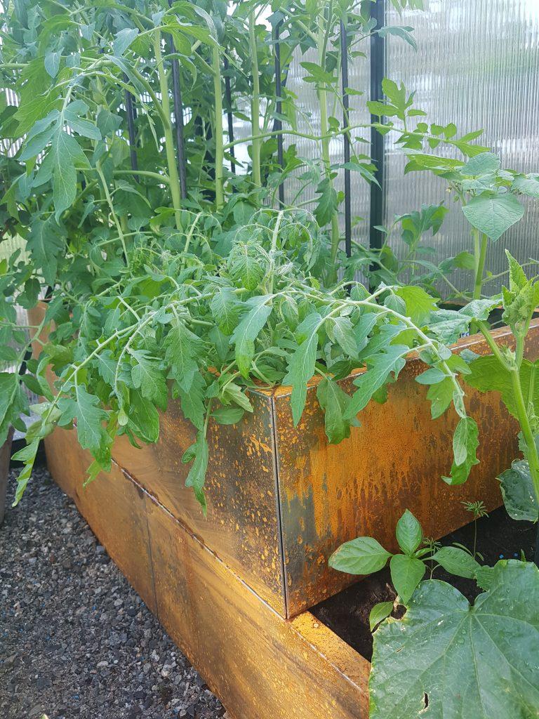 så tomater