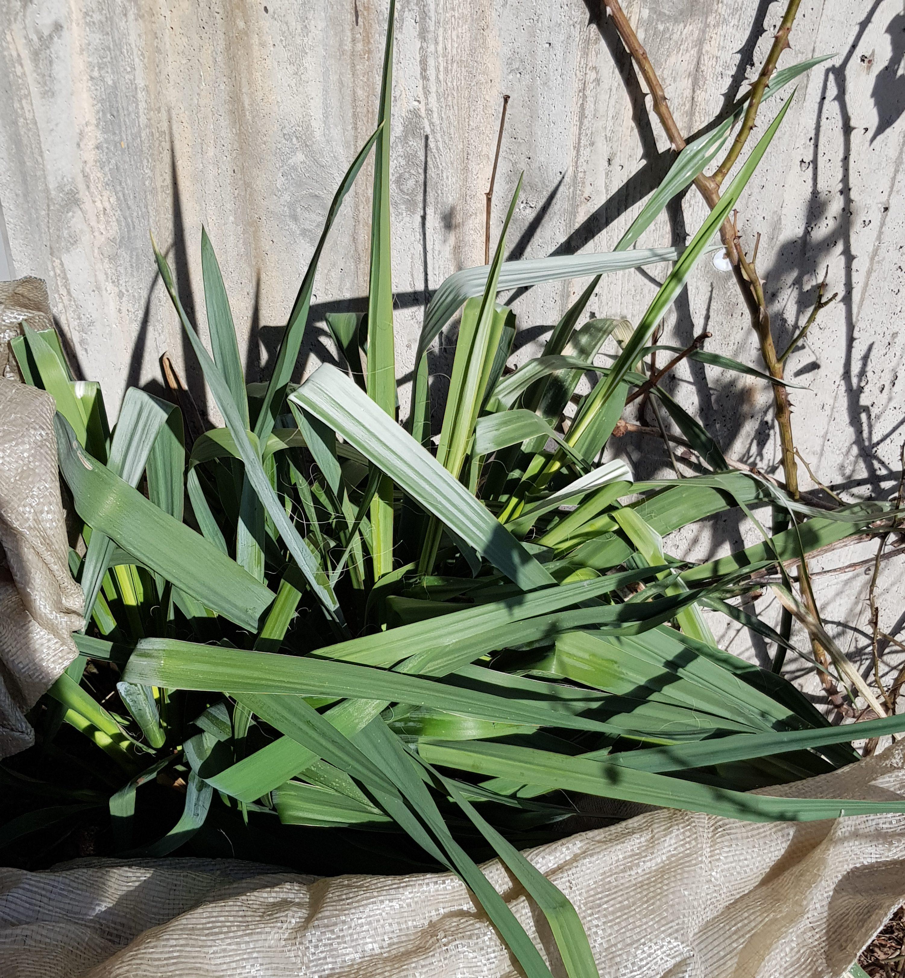 Nå er det tid for å beskytte planter mot sterk vårsol.