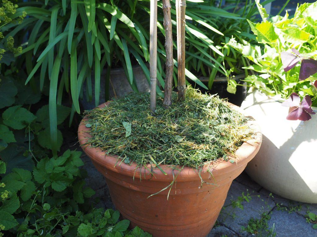 vannetips og gressdekke