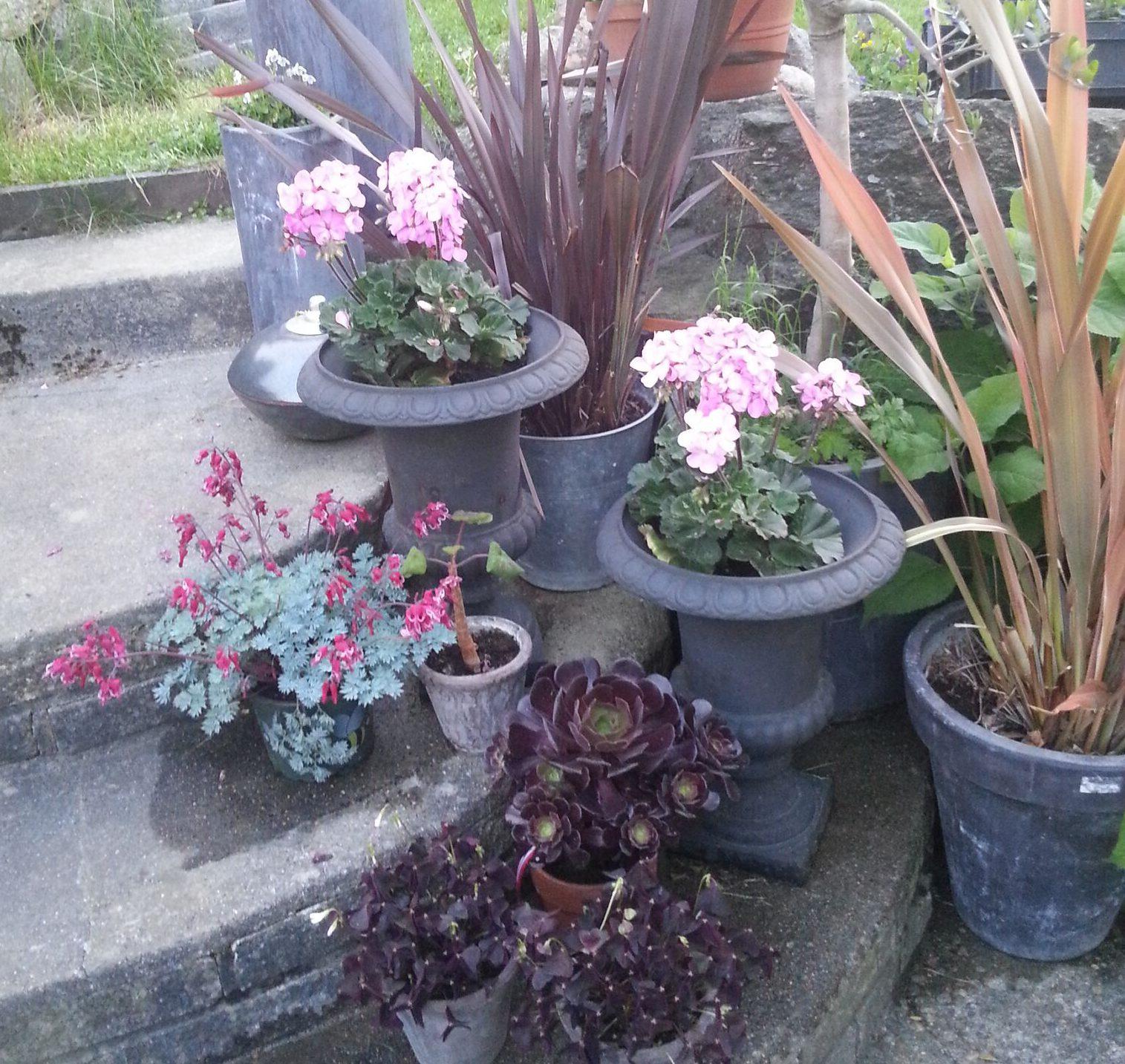Lettstelte og fantastiske planter til terrassen? Her er noen forslag.