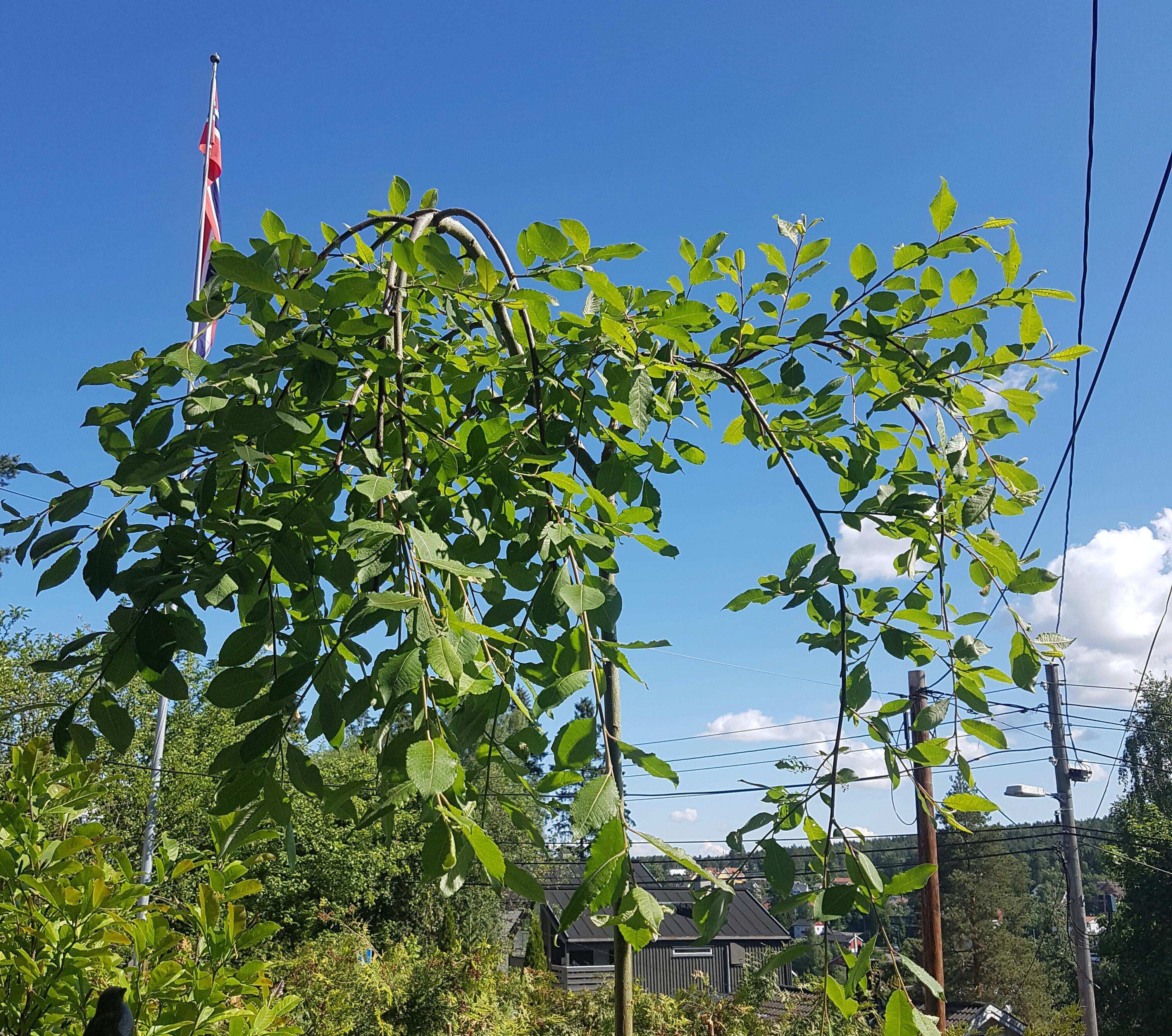 Plant et et tre på balkongen eller terrassen?
