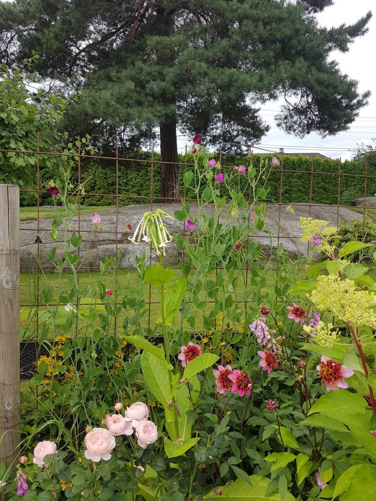 Blomsterertene er i bakkant med lavere planter i front som også gir skygge til røttene