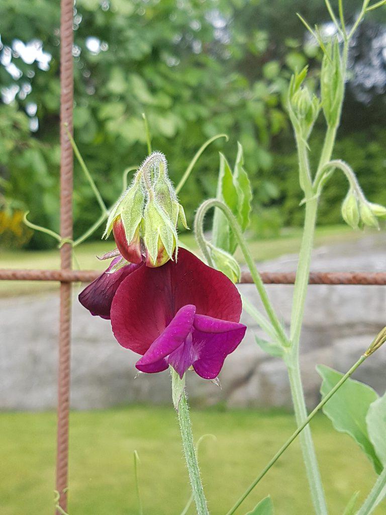 Blomsterert med klatretråder i bakgrunnen