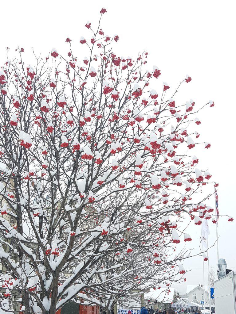 Flotte trær med masse mat til fuglene.