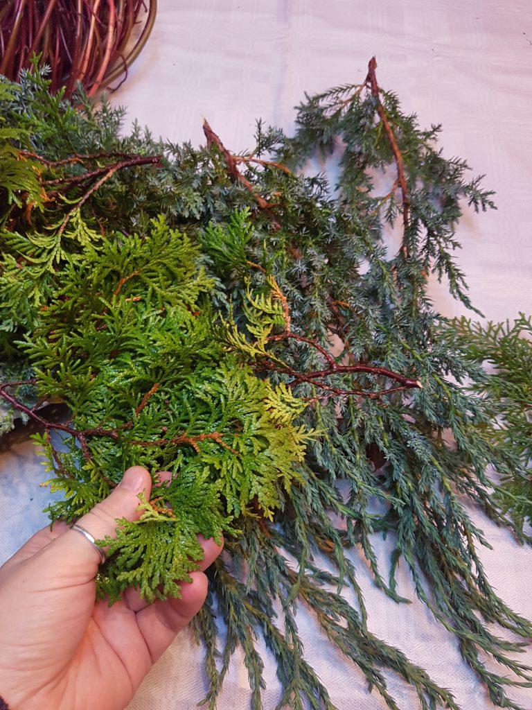 Smaragd Tuja har fine og tette grener som er perfekt til Krans