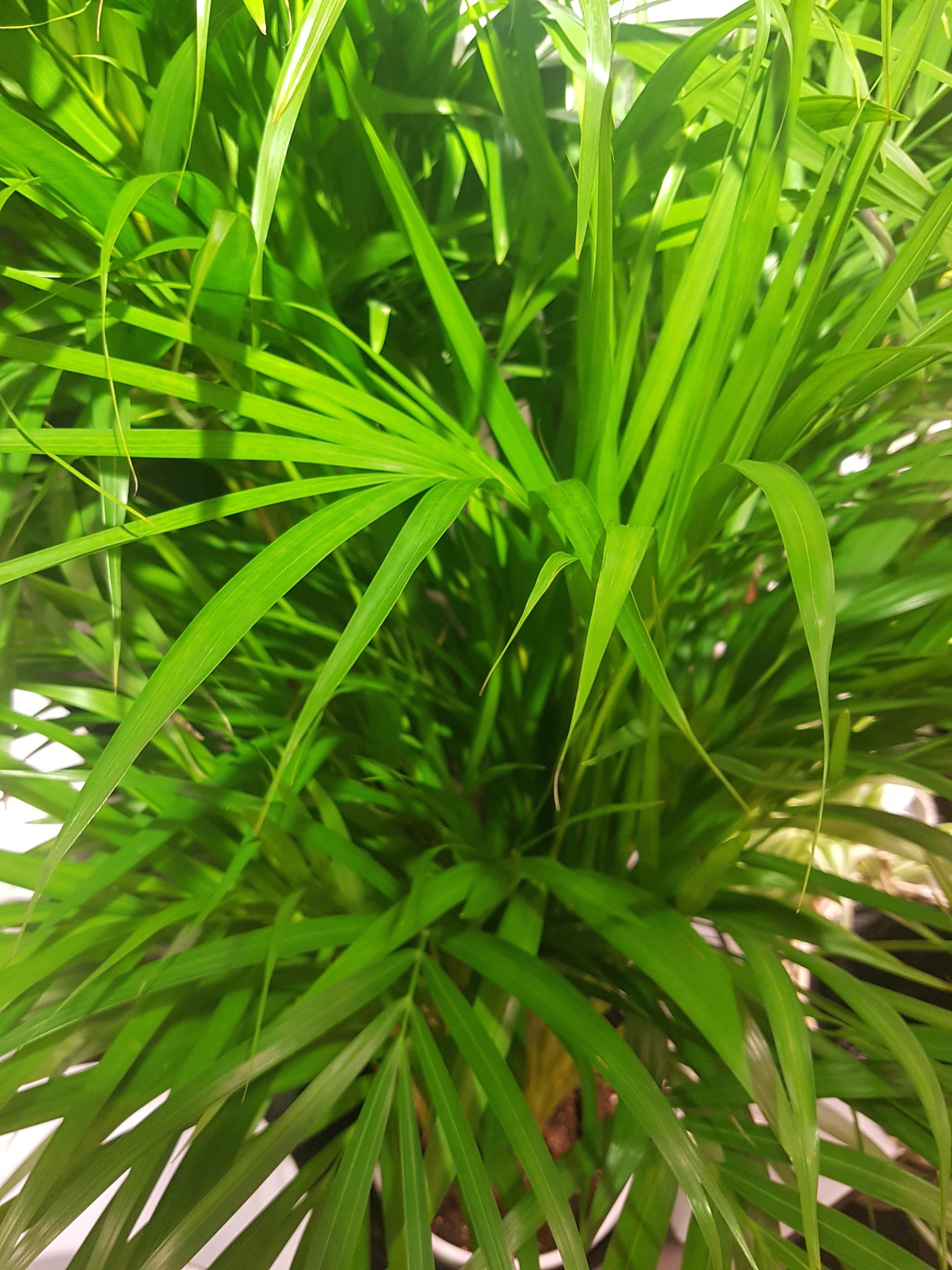 Grønne planter inneklima