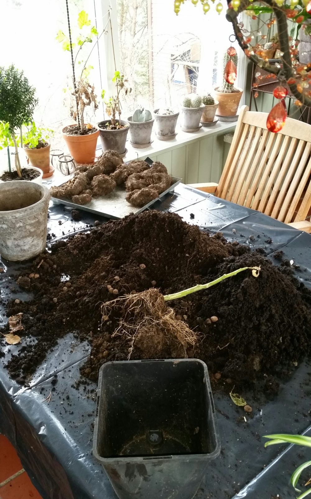 omplanting