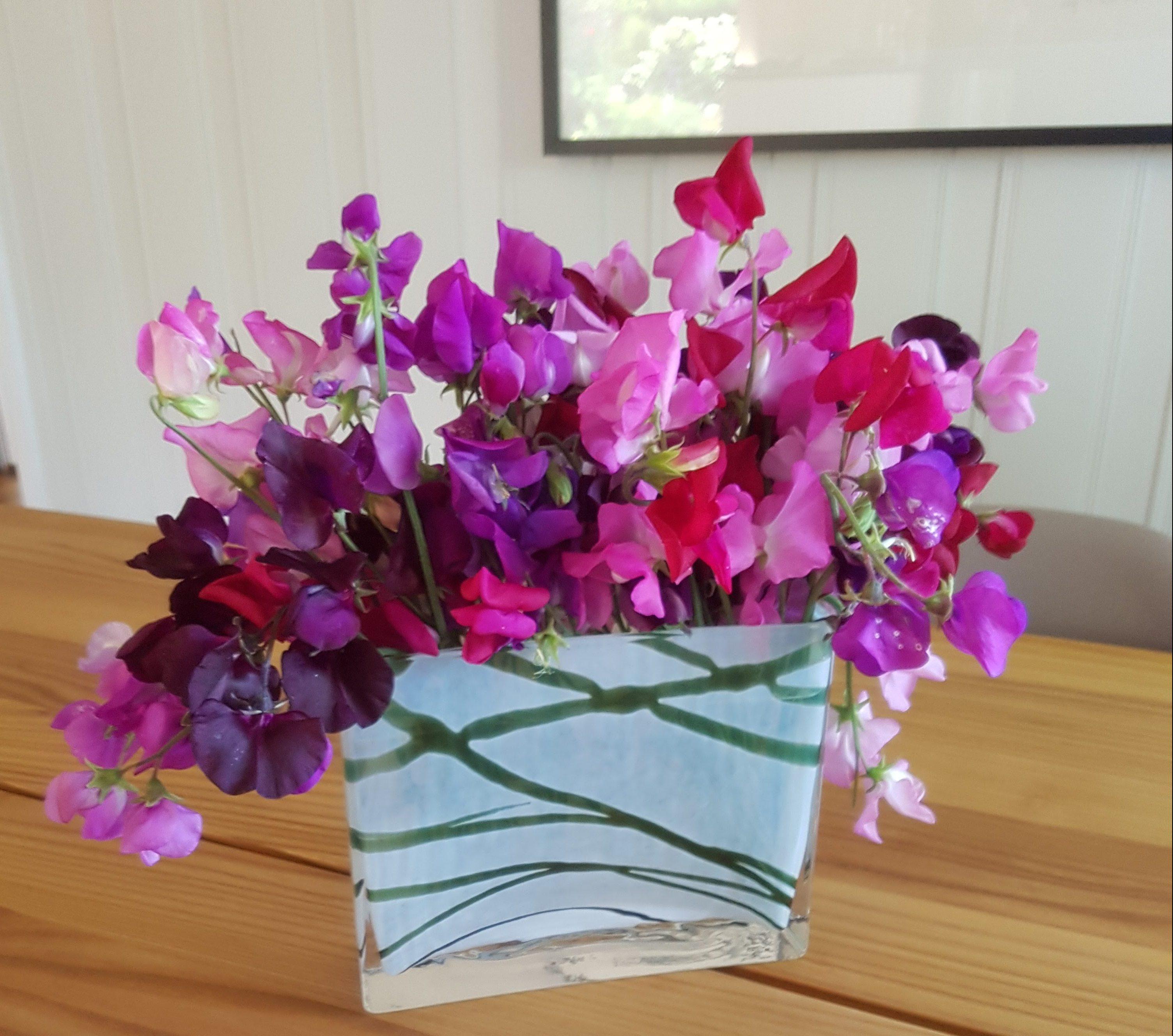 Skånsom utplanting av Blomsterert og andre tettvokste småplanter.