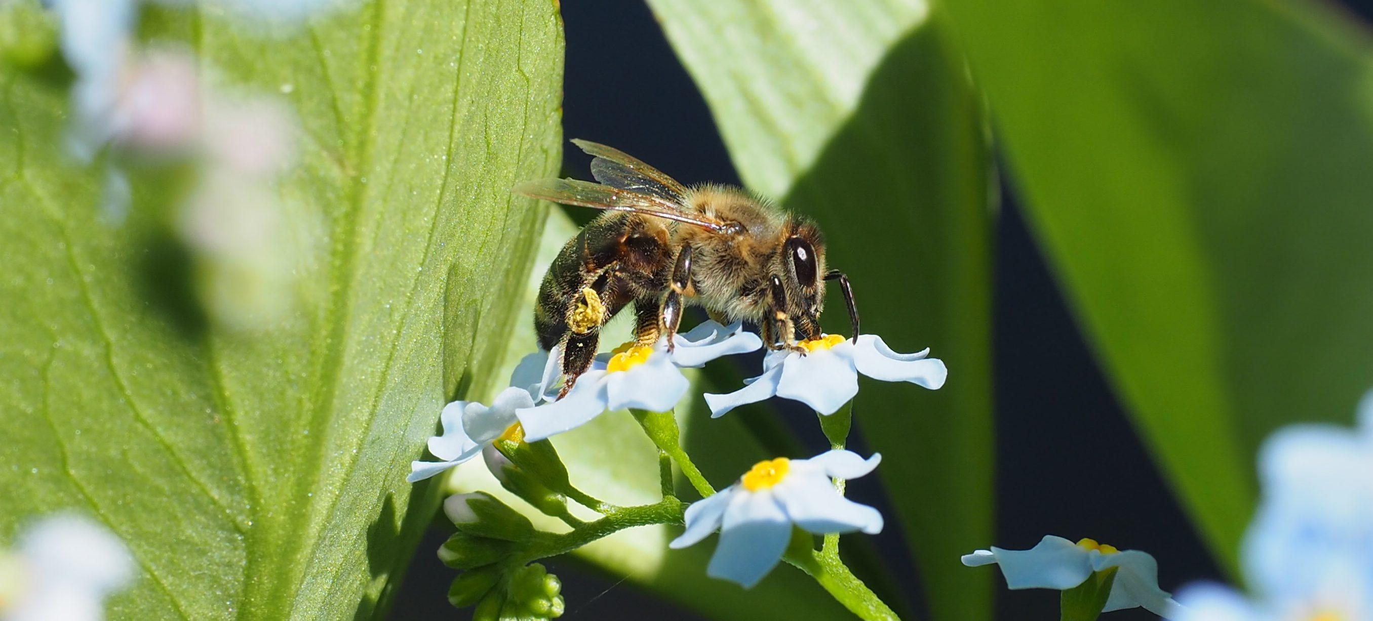 Bier i hagen og 10 spørsmål til en birøkter