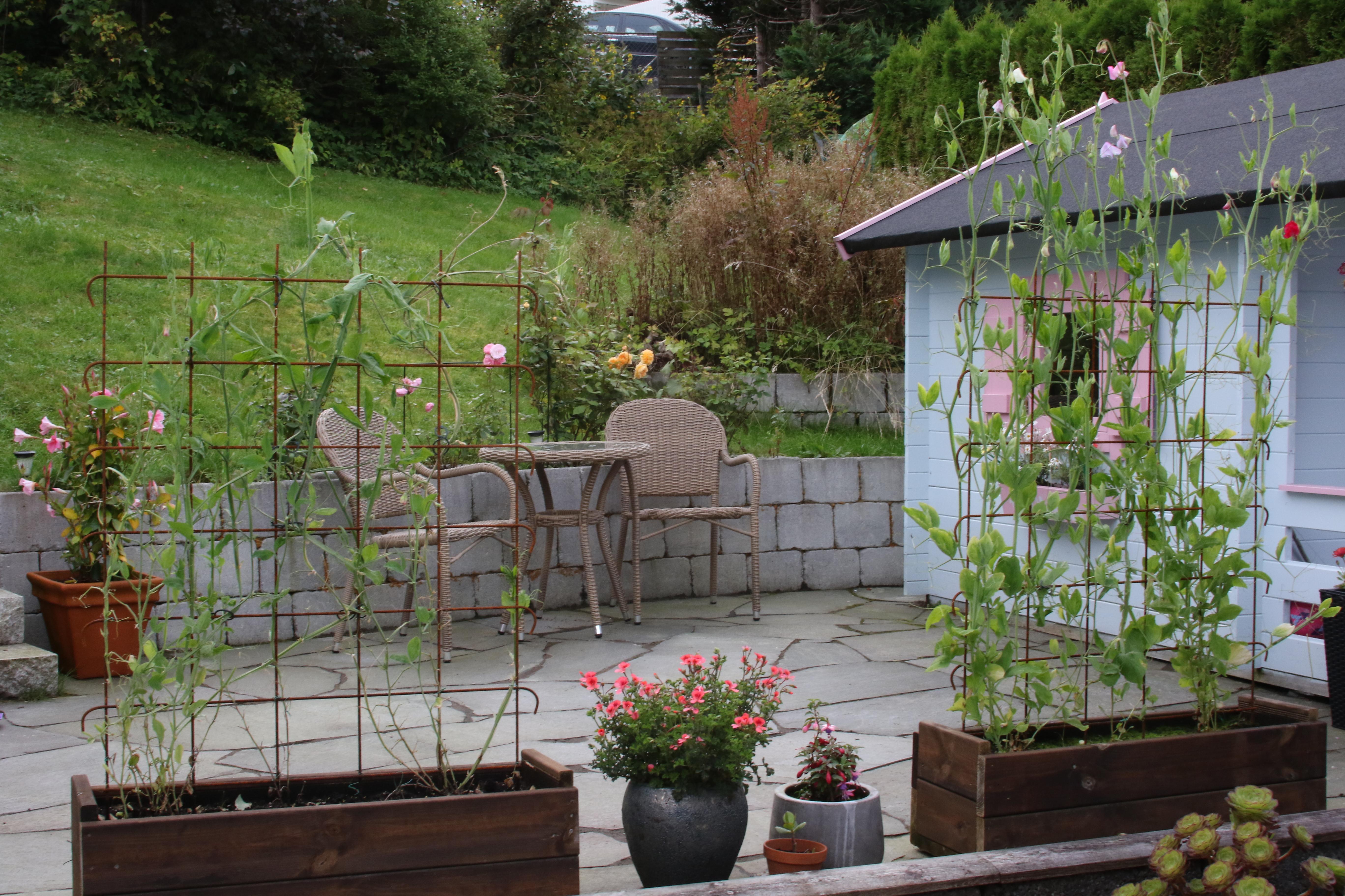Hvordan det spirer og gror i god jord eller dårlig jord
