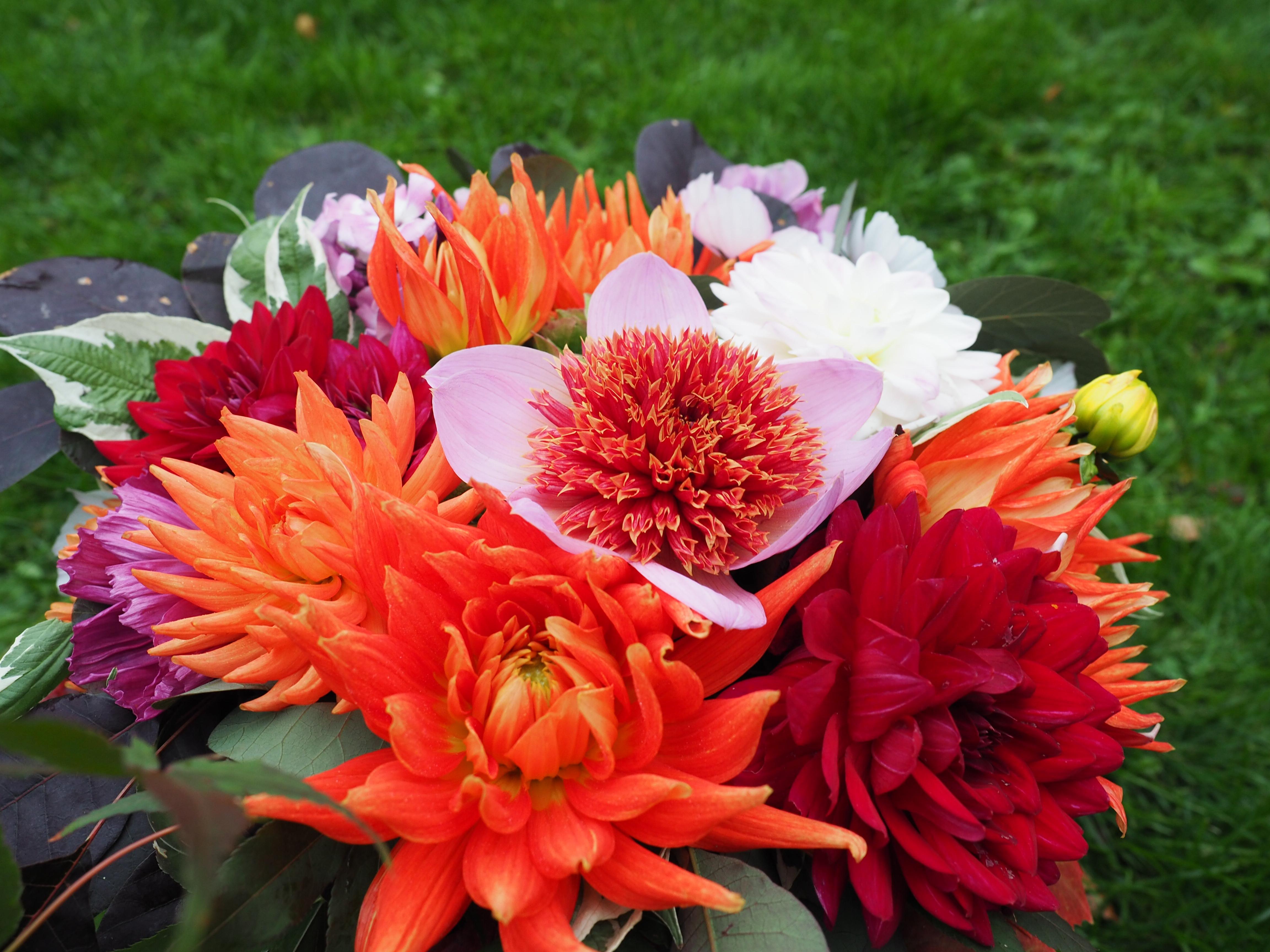 Høstbukett med hva du finner i hagen til helgen.
