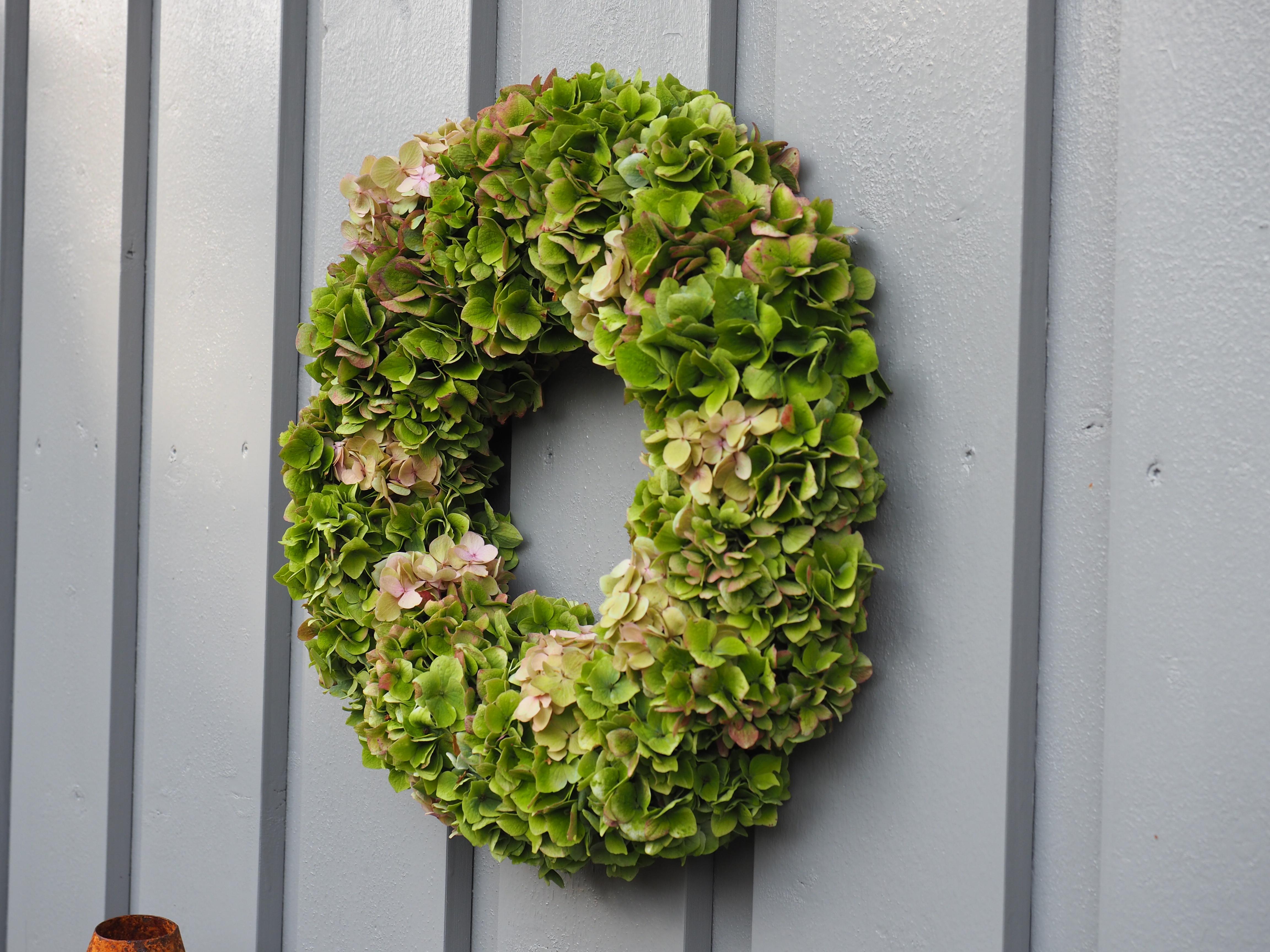 Høstkrans av hortensia etter sommerblomstringen