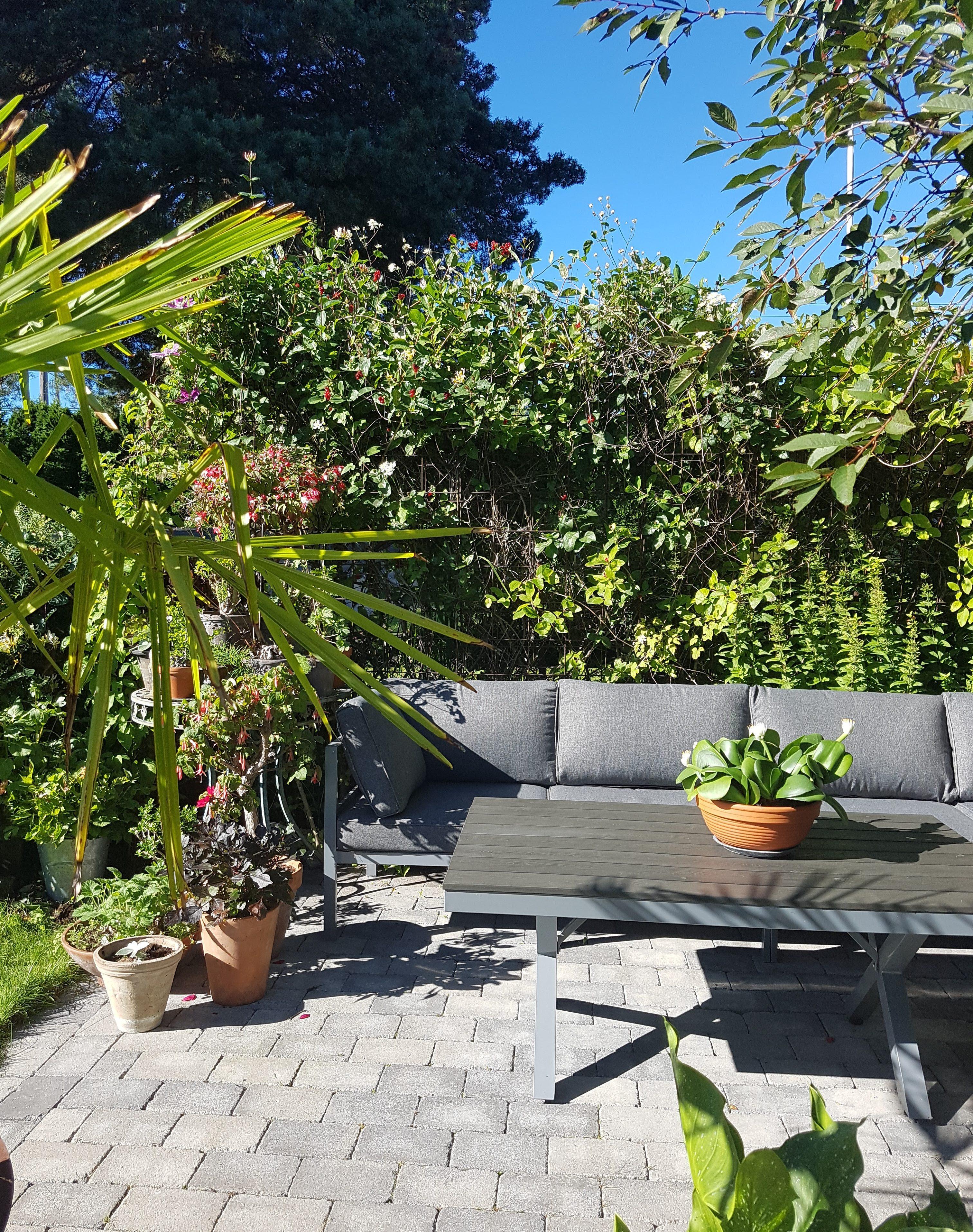 Slik lager jeg en levende levegg eller pergola som danner skreddersydde rom i hagen