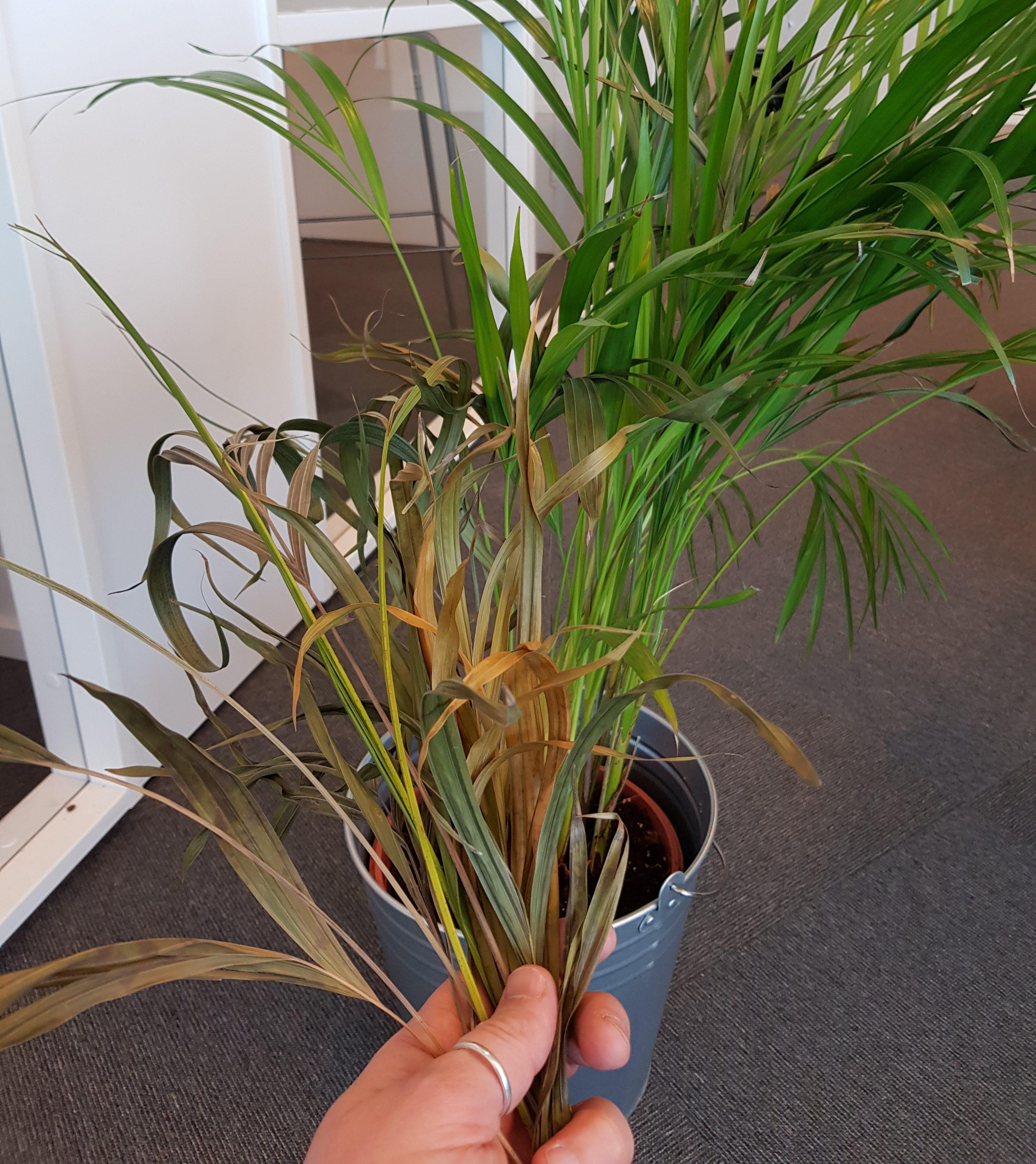 Grønne planter tåler ikke kulda i vinternorge!