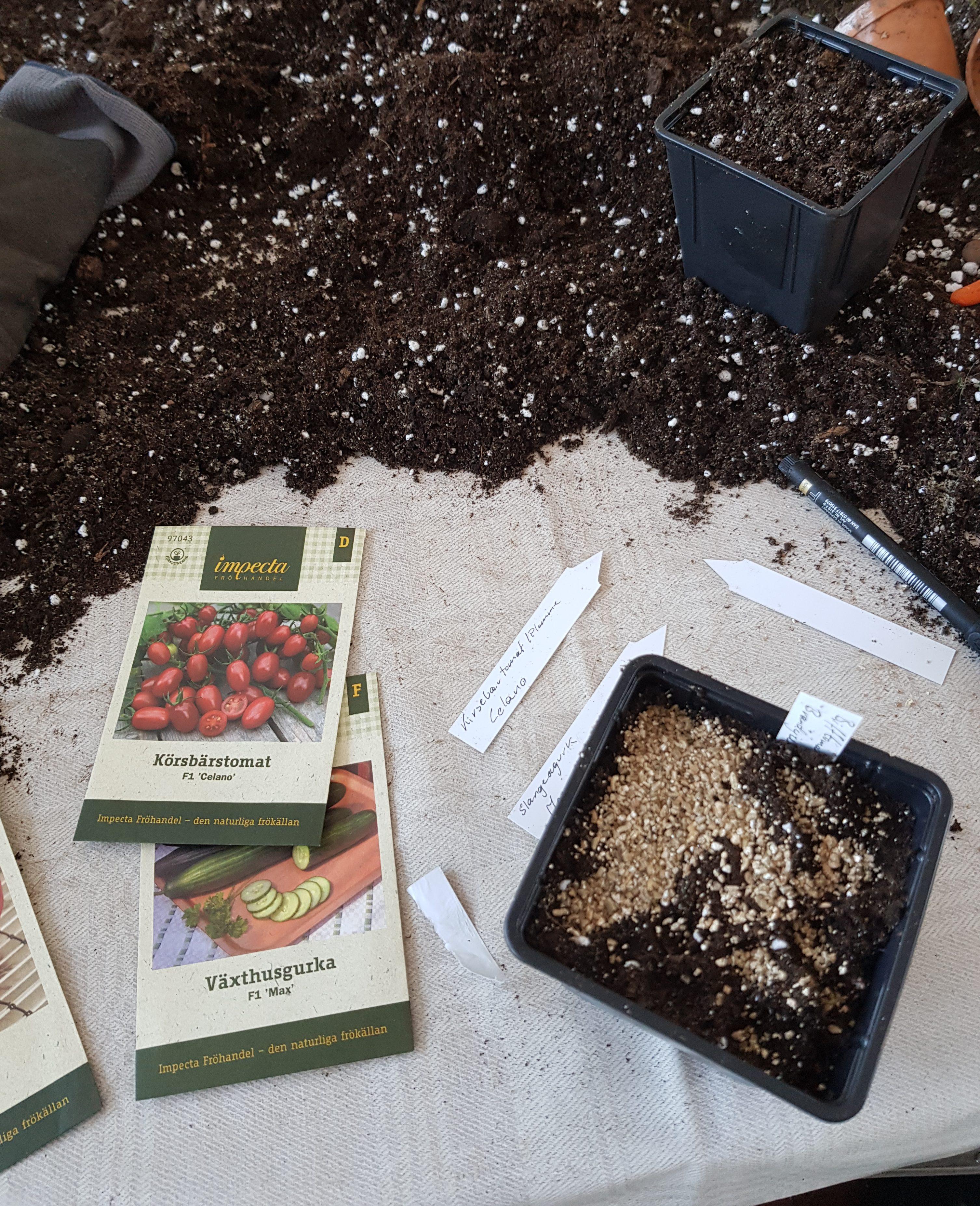 Litt sent ute med å så tomater i år, men slik får jeg fart på frøene.