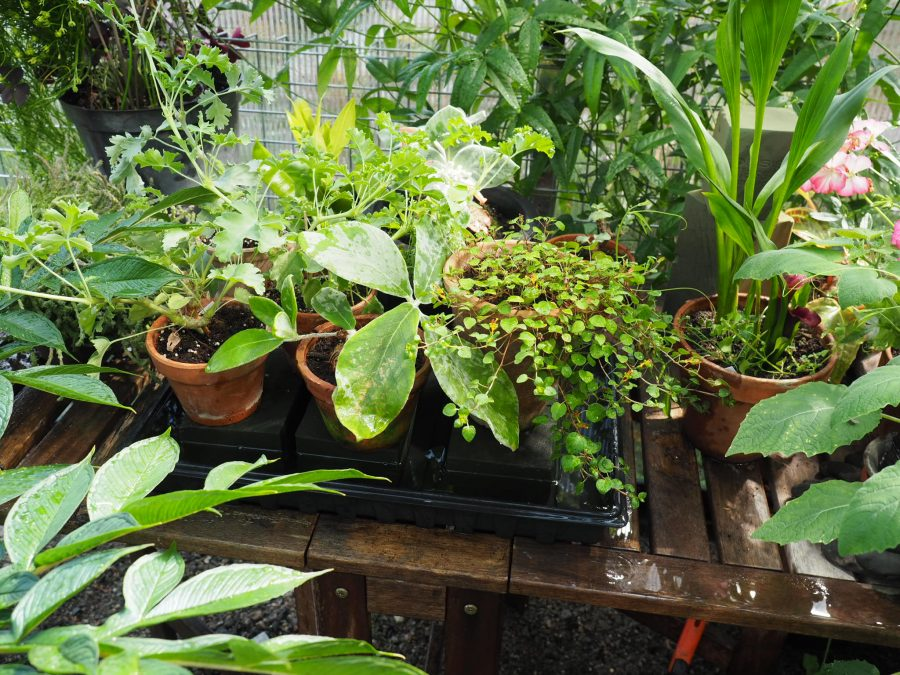 ferievanning av potteplanter