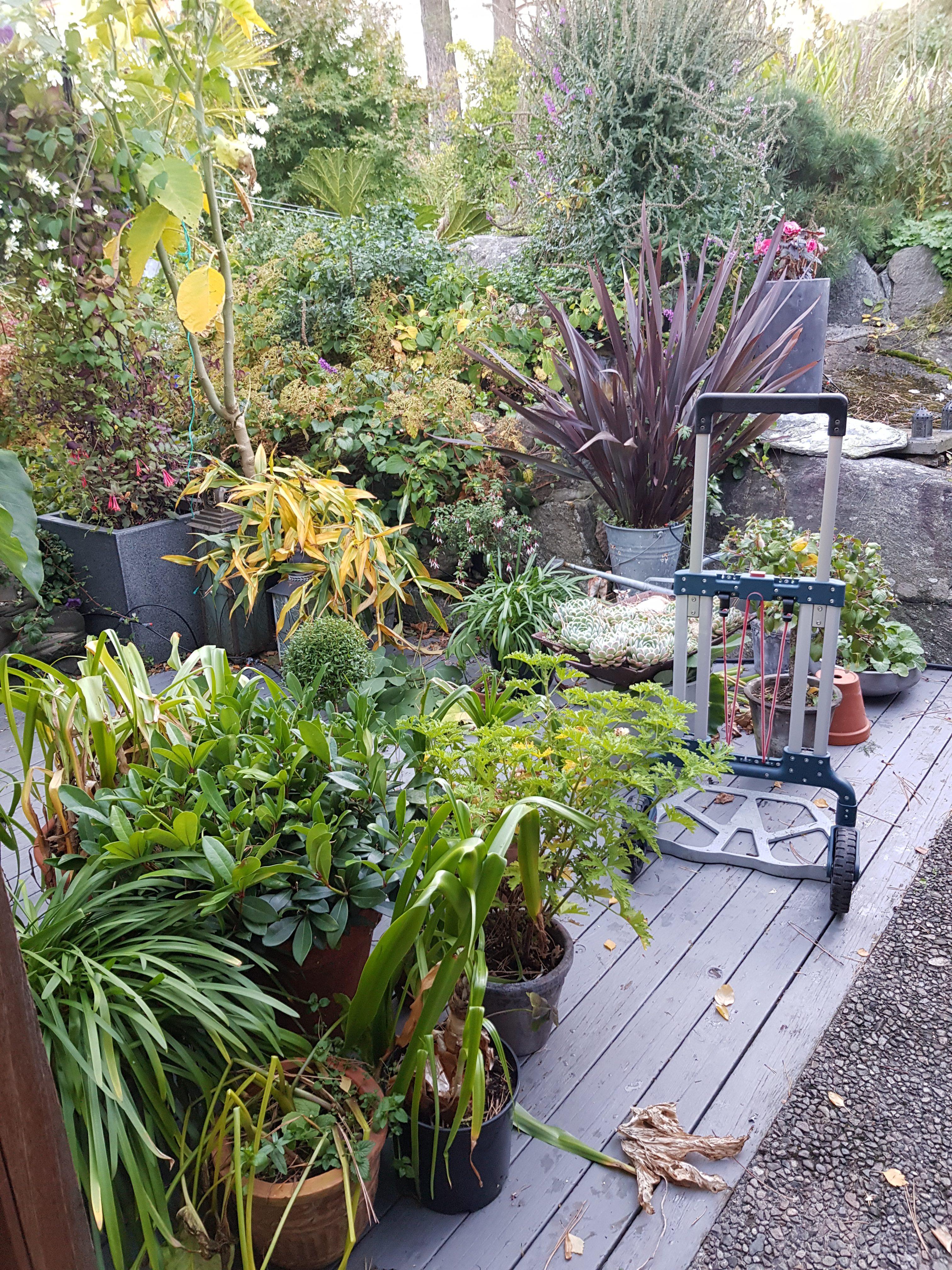 Sekketralle er kanskje mitt viktigste hjelpemiddel i hagen.