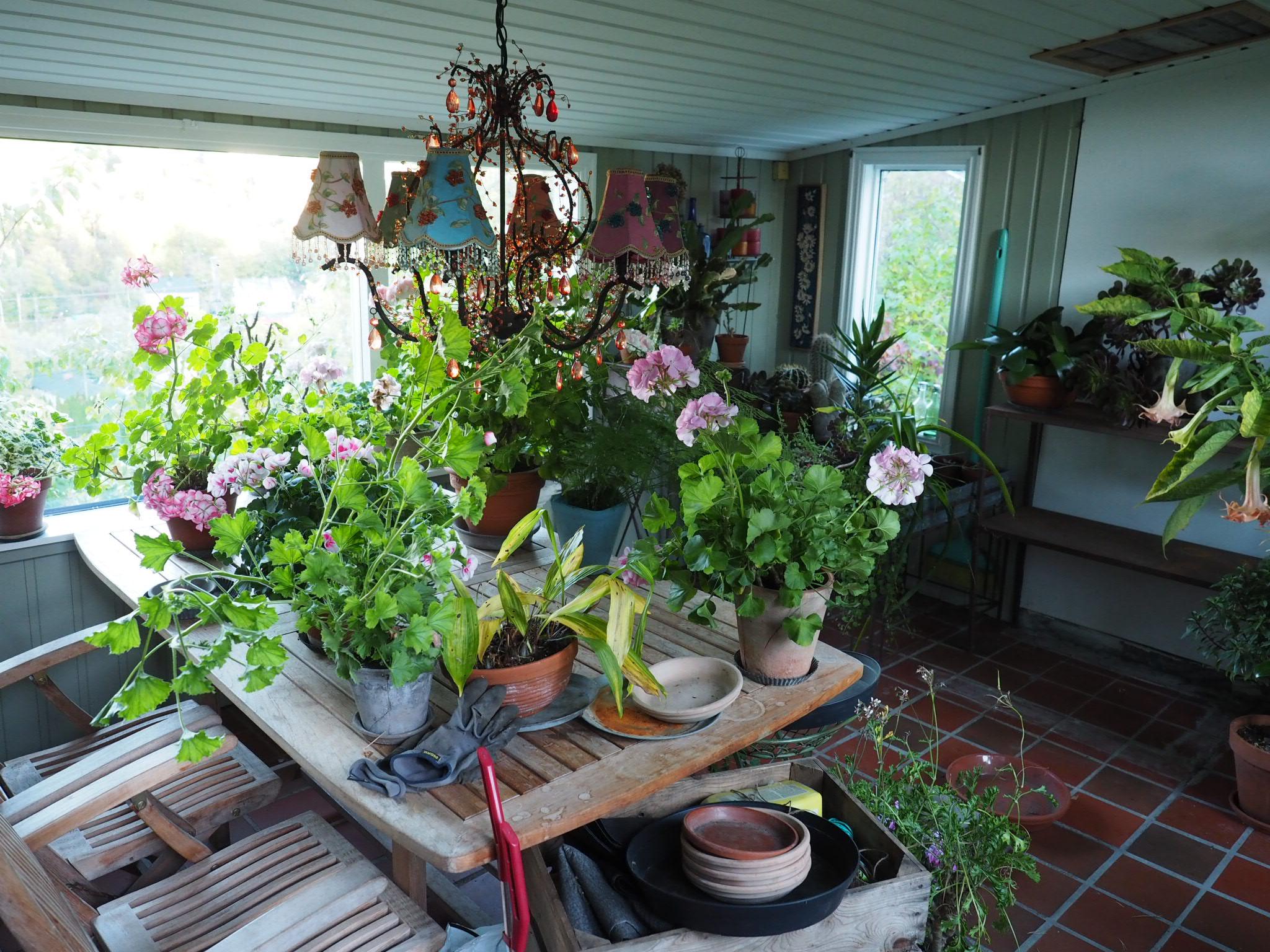 Høst og vinteroppbevaring av planter, slik gjør jeg nå.