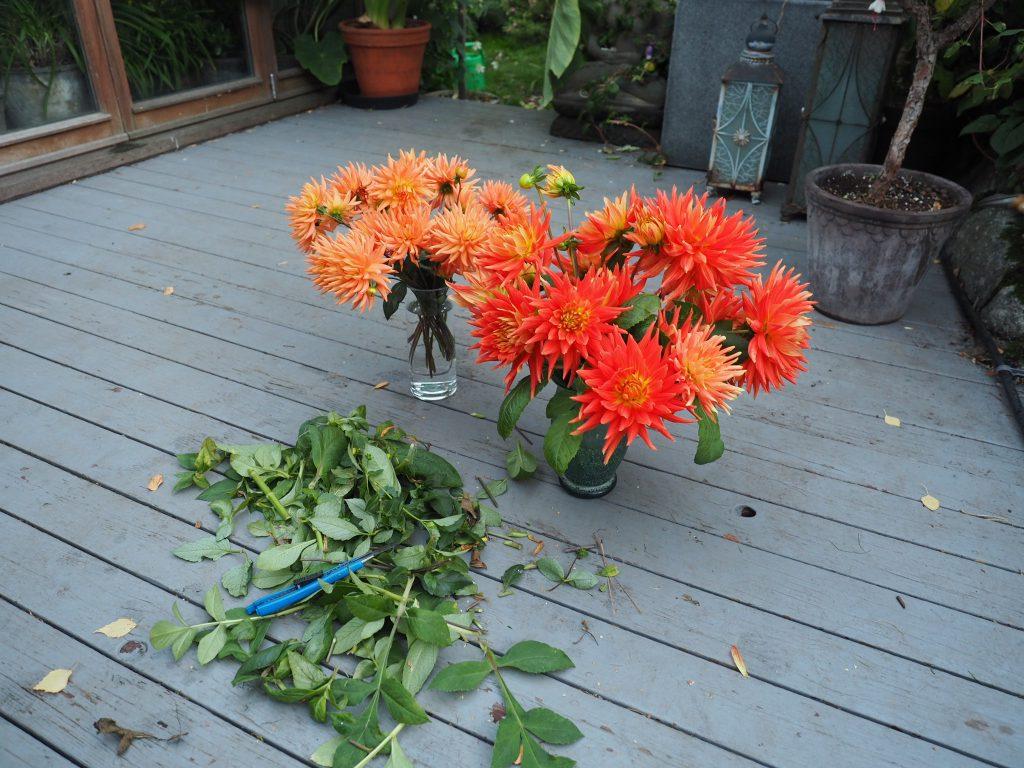 vinteroppbevaring av planter