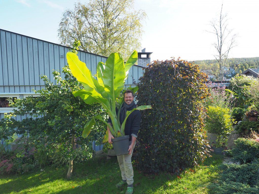 Et hageår er gått, og det nye er allerede i full gang:-)