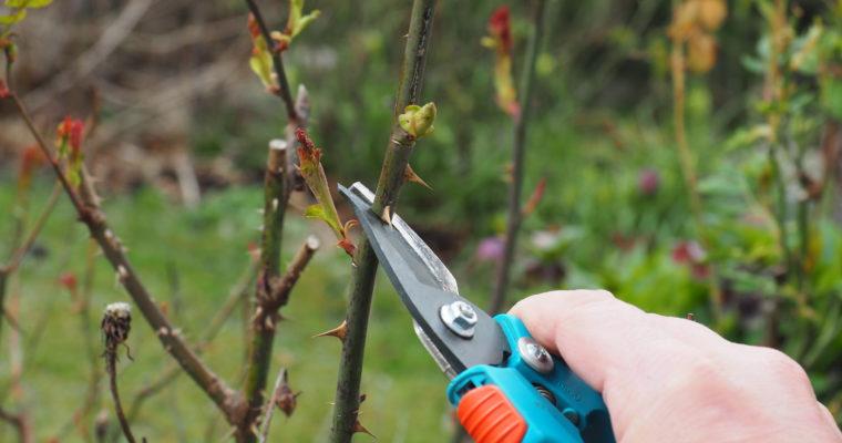 5 grunnleggende beskjæringstips i hagen.